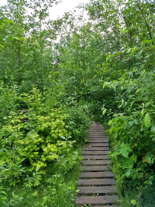 An overgrown Tracks from Hell.
